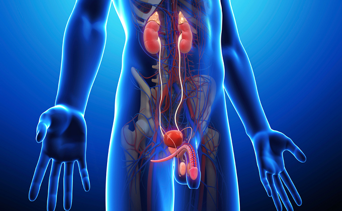 http://urocoral.com/wp-content/uploads/2018/03/renal.jpg